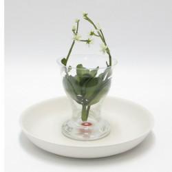 vaso trasparente basso su piatto
