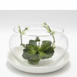 vaso trasparente largo con base in ceramica
