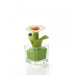 cubo 6x6 fiore margherita
