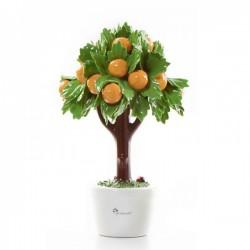 albero di arance 19cm