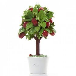 albero di mele 33cm