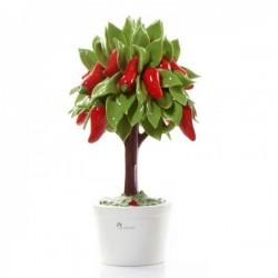 albero di peperoncino 33cm