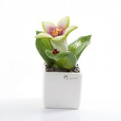 pianta quadrata piccola giglio