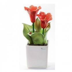 pianta quadra grande ibiscus