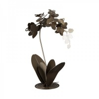 pianta orchidea da terra bronzo