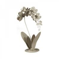 pianta orchidea da terra sabbia