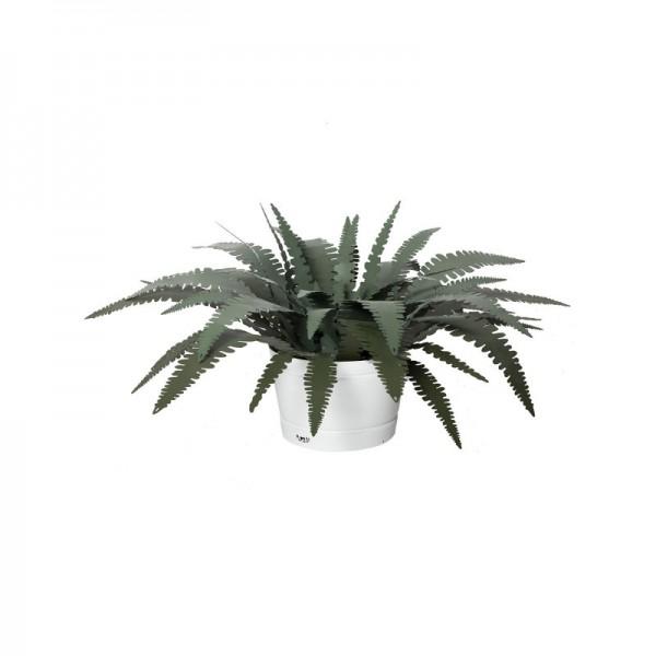 pianta felce piccola verde