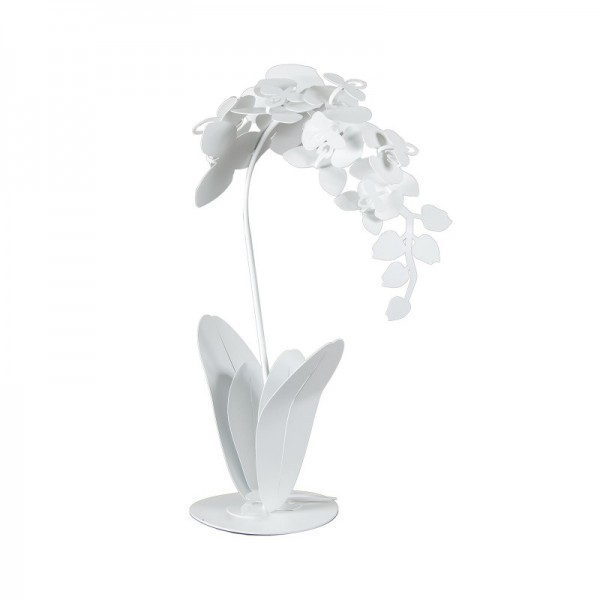 pianta orchidea da terra bianco